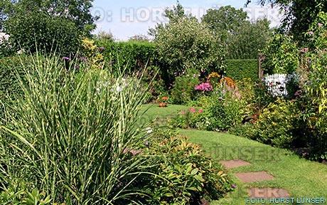 horst lünser - gartenpflanzen - Gartenpflanzen