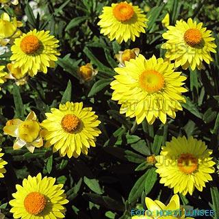 Pflanzen Für Schattigen Garten ist gut design für ihr wohnideen