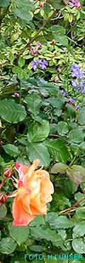 Pflanzenausschnitt